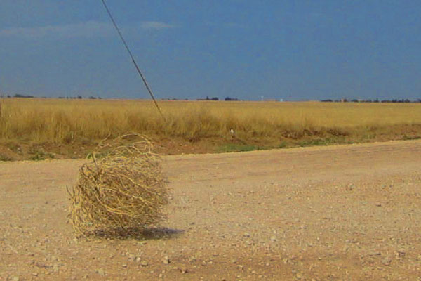tumbleweed-totally4women.jpg