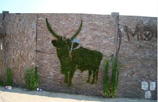 graffiti_bull.png.jpg