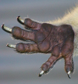 hand%281%29.jpg