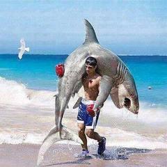 shark_puncher.jpg