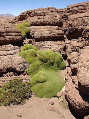 Desert%20Plant